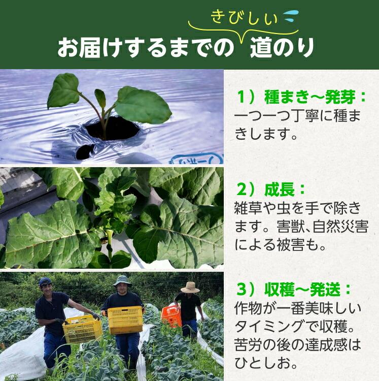 希少な有機JAS認証の国産オーガニック野菜