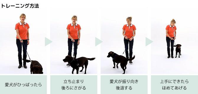 トレーニング方法:愛犬が引っ張ったら → 立ち止まり後ろに下がる → 愛犬が振り向き後退する → 上手にできたらほめてあげる!