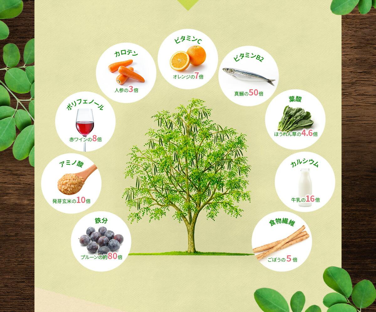 モリンガの豊富な栄養素と薬効