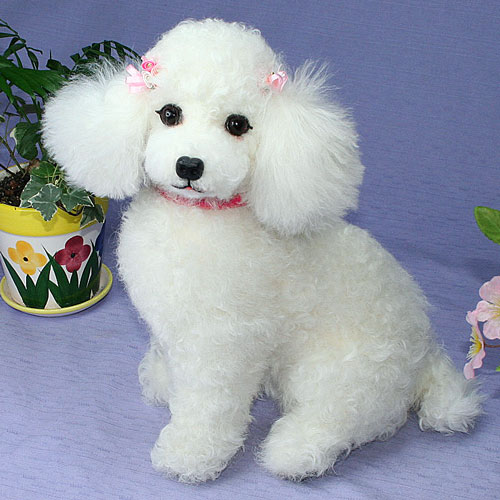 Japanese Toy Dogs For Sale