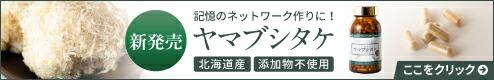 ヤマブシタケ