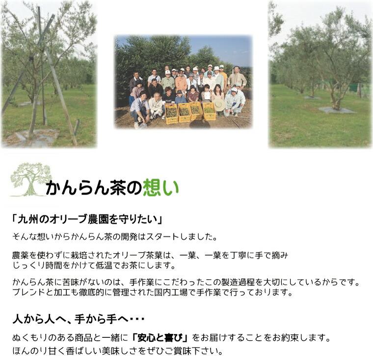 九州福岡にあるオリーブ農園を守るためにかんらん茶の開発がスタートしました。