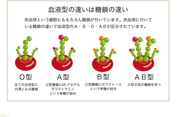 血液型の違いは糖鎖の違い