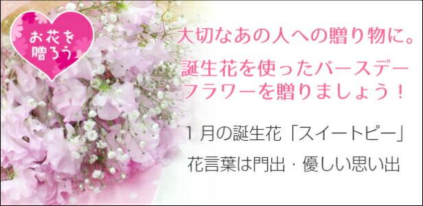 1月誕生花はこちら
