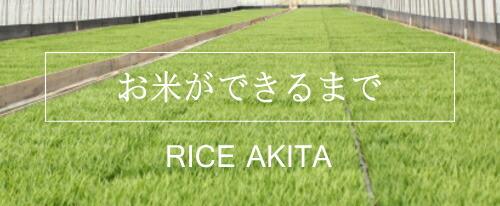 お米ができるまで