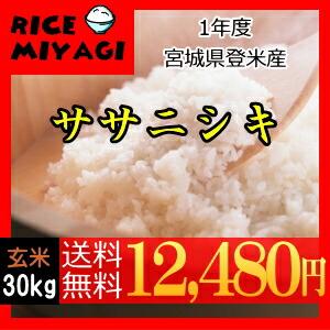 令和1年度産 新米 宮城県登米産ササニシキ30kg 玄米