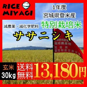 30年度産 新米 宮城県登米産 特別栽培米ササニシキ30kg 玄米