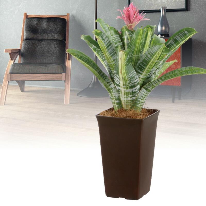 観葉植物鉢 角