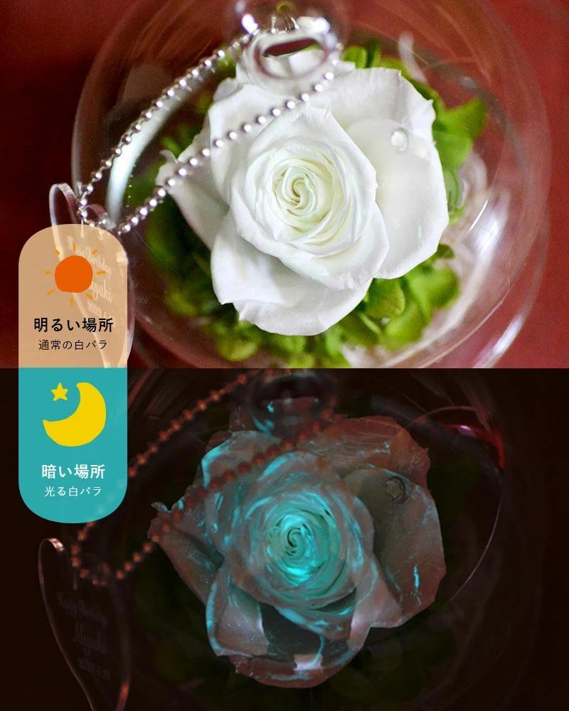 白バラの日中の様子と、暗闇で光る様子の比較画像