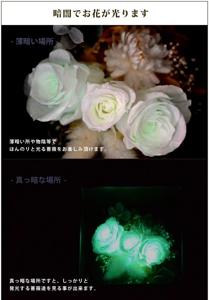 暗闇で白薔薇がしっかりと光ります