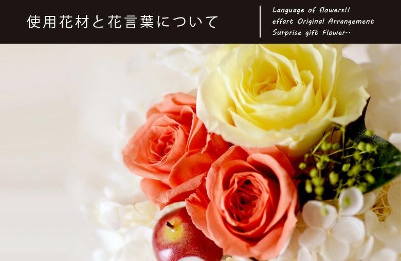 白陶器プチアップルの使用花材についての説明