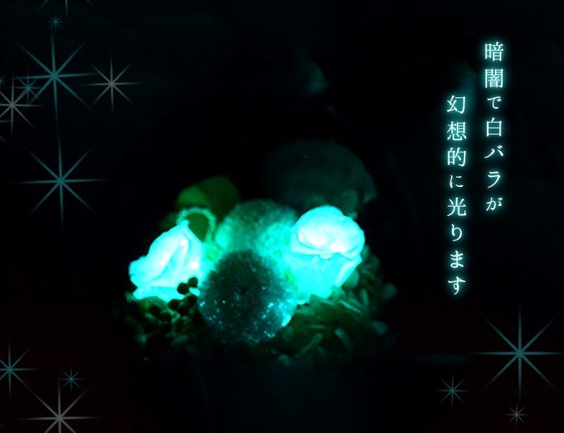 暗闇で白バラが実際に光るイメージ画像