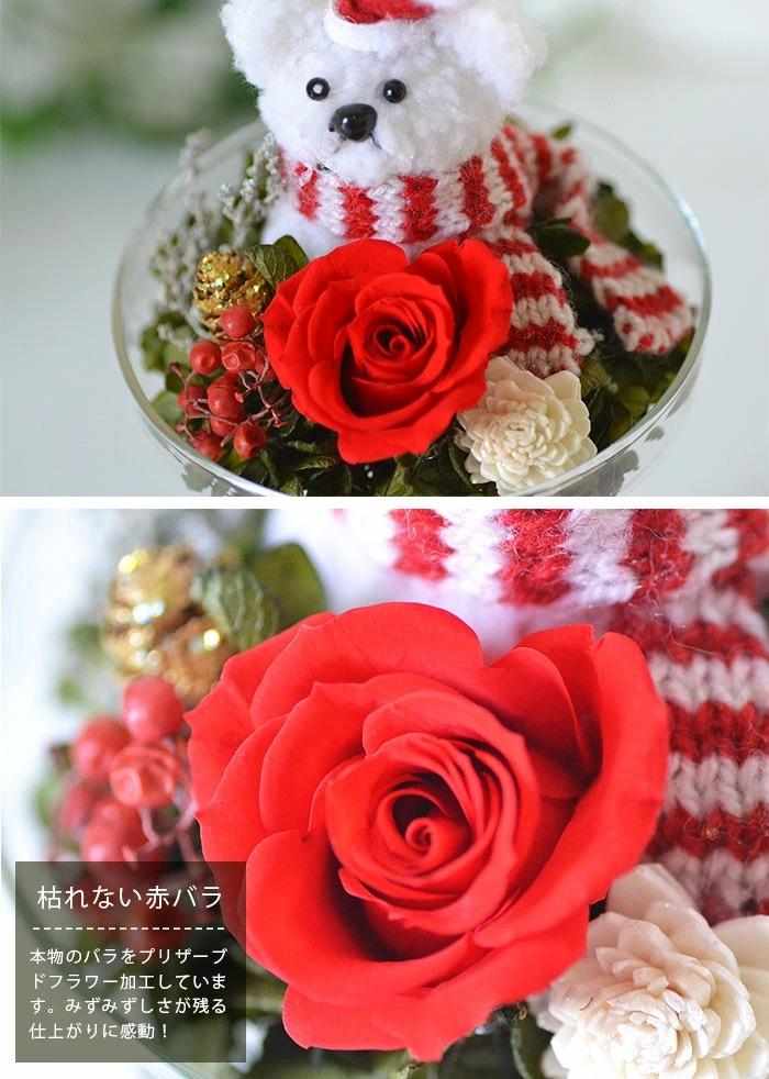 赤バラの拡大写真
