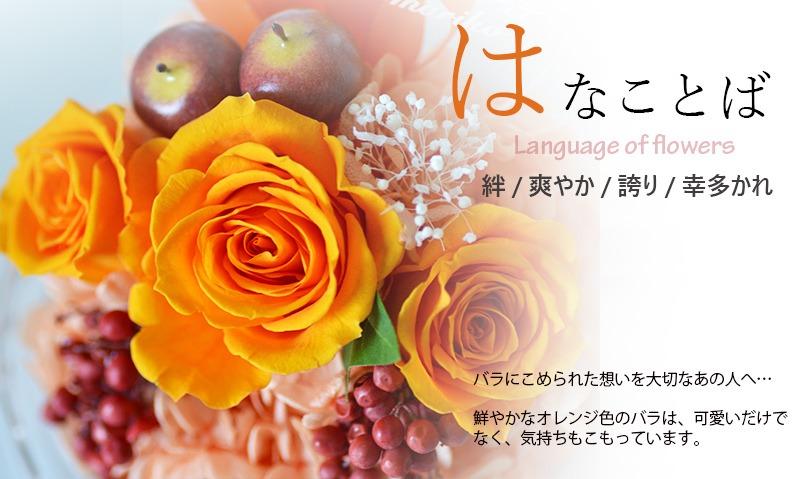 オレンジのバラに込められた花言葉の意味について