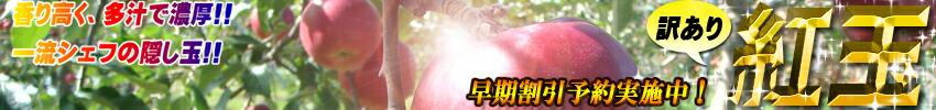 青森県産りんご 訳あり 紅玉