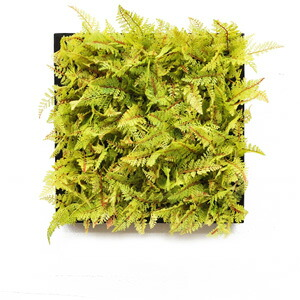 Green Wall De'corライトグリーンシダ
