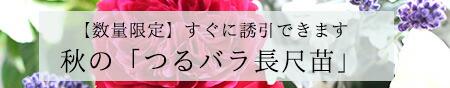 バラ 長尺苗