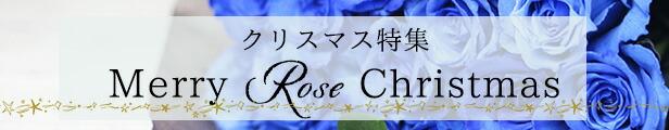 バラ園のクリスマス