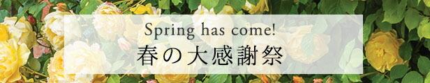 春の大感謝祭
