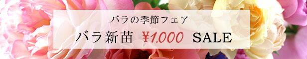 新苗\1000セール