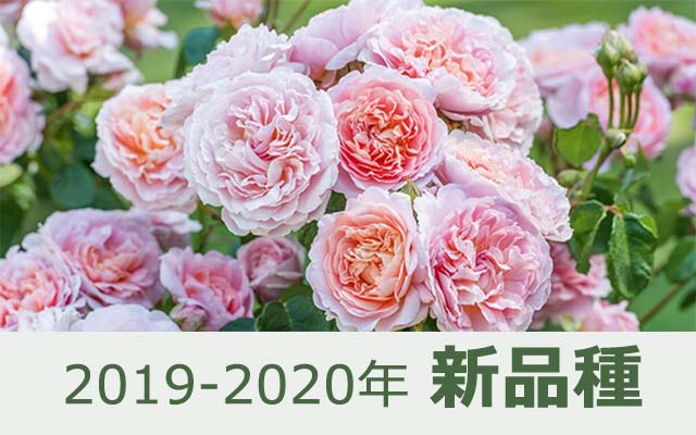 2019-2020年 新品種
