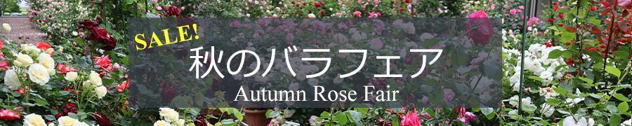 秋のバラ苗セールトップページ