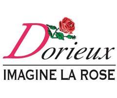 バラ苗ドリュ Dorieux