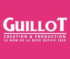 バラ苗ギョー Guillot