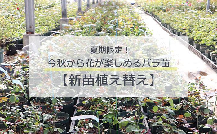 バラ新苗植え替えトップページ