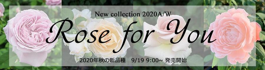 バラ苗Rose for You 2020年秋の新品種