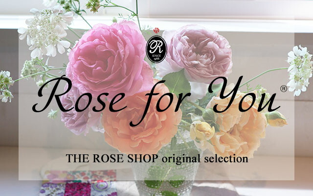 バラ苗Rose for You