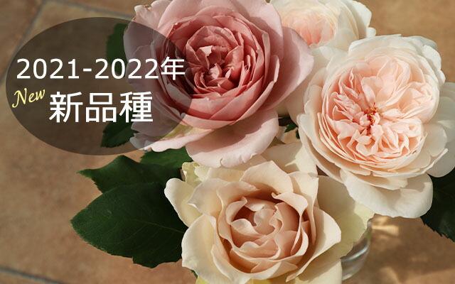 バラ2020-2021年新品種