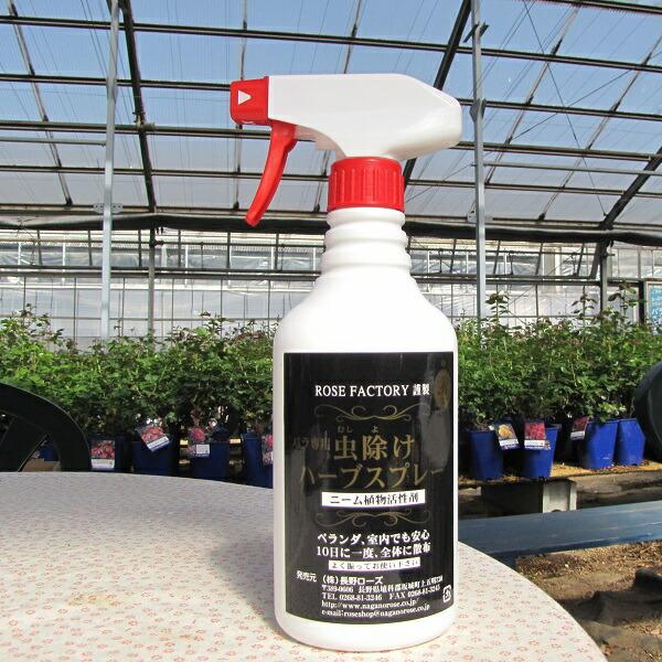 無農薬でバラを育てたい方におすすめの害虫対策
