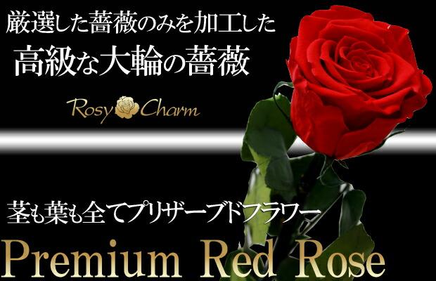 枯れない花 赤いバラ
