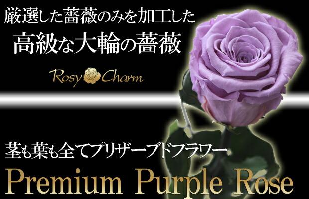 枯れない花 紫のバラ