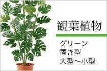 観葉植物(置き型・大型)