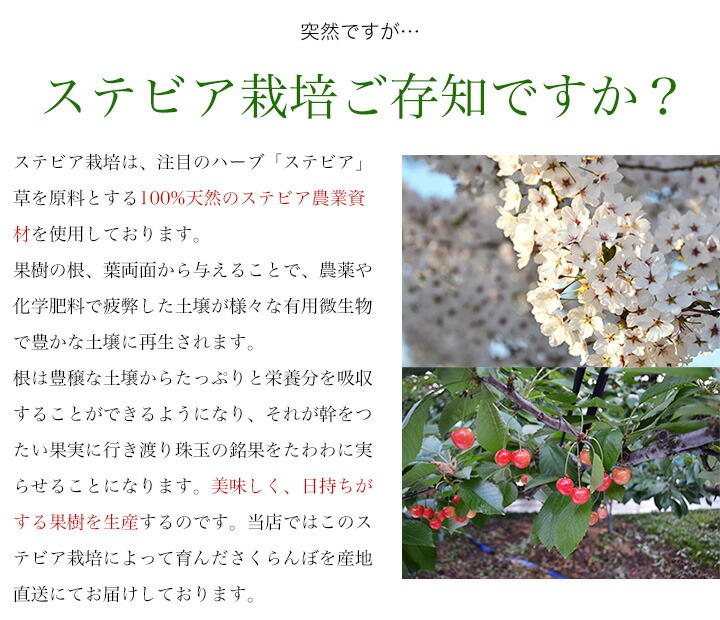 ステビア栽培をご存知ですか