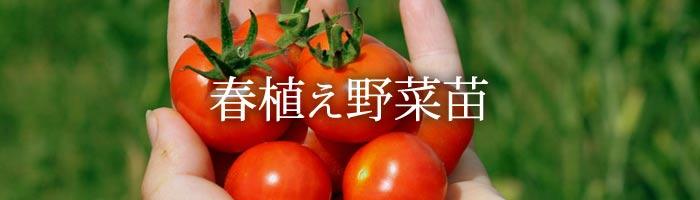 春植え野菜苗