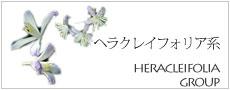 ヘラクレイフォリア系