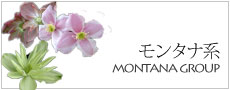 モンタナ系