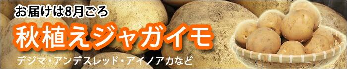 種芋 秋ジャガイモ