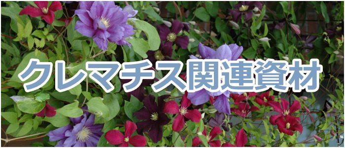 さいじょう緑花 クレマチス 関連資材