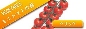 野菜苗の販売