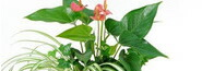 写真:寄せ植え・ミニ観葉植物
