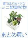 2点以上で【送料無料】 ミニ観葉植物 お得なまとめ買い♪