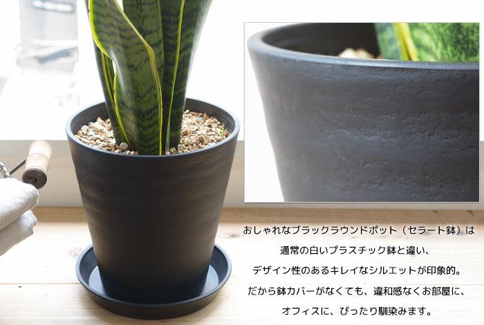 セラート鉢