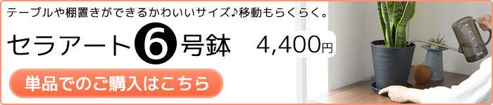 セラアート6号鉢