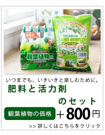 肥料と活力剤セット