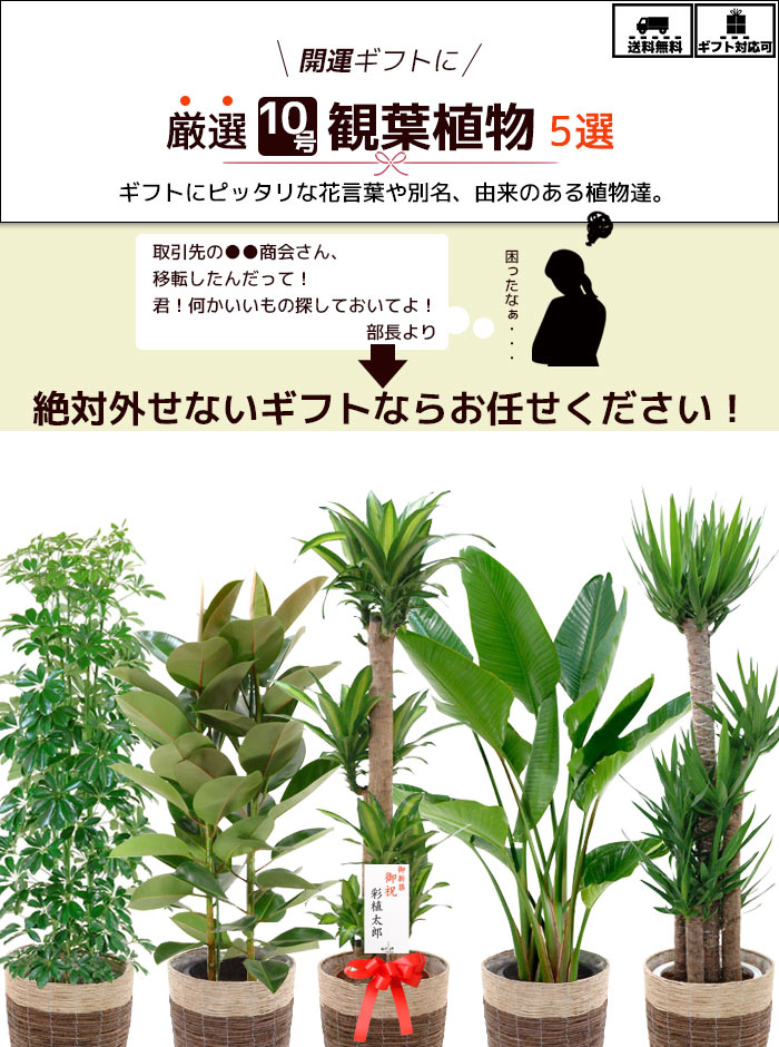 選べる鉢カバー付き10号植物