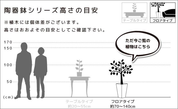 植物のサイズ